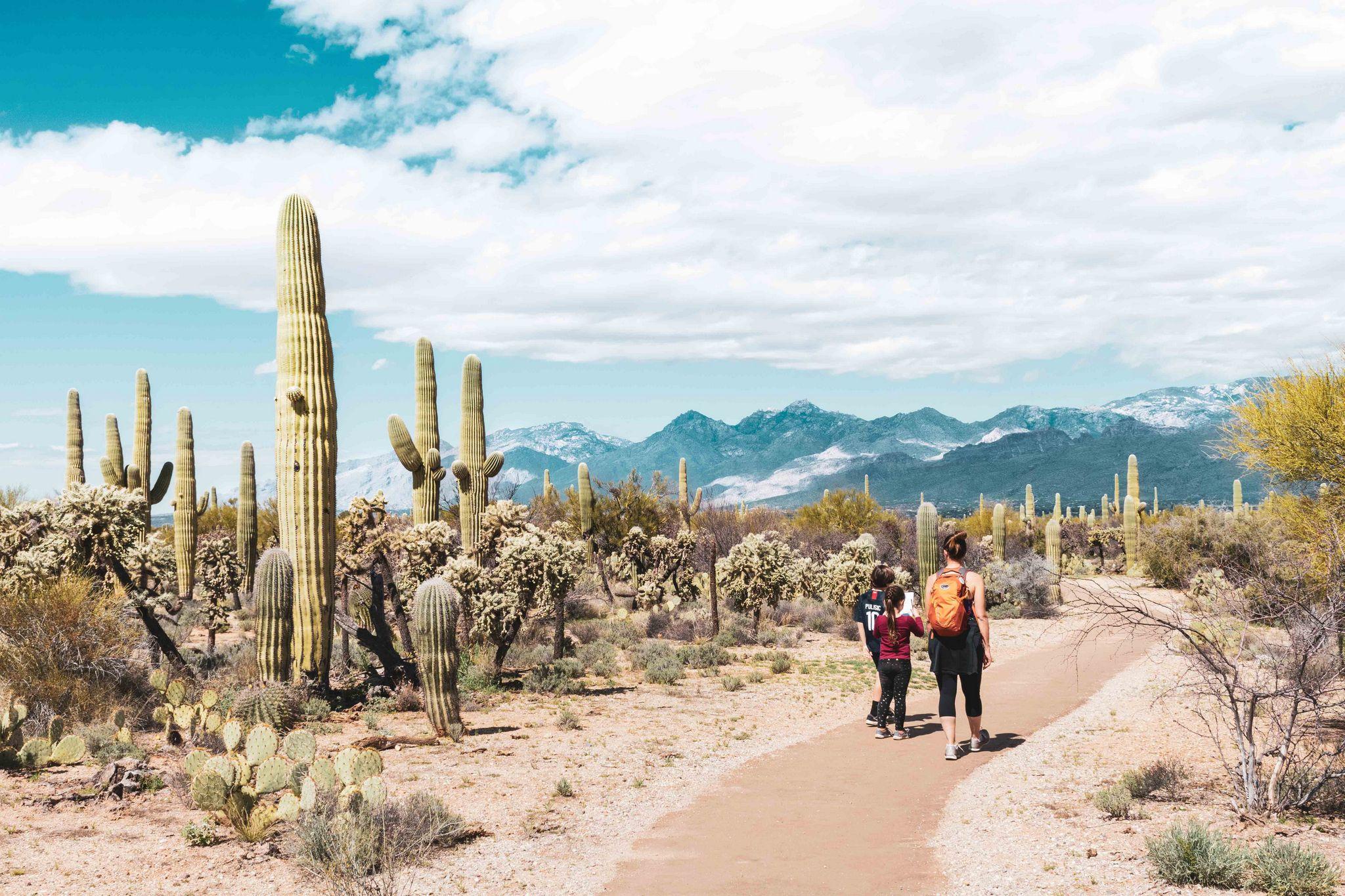 Parkseekers Saguaro