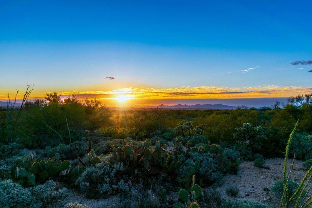 Parkseekers Saguaro Sunset