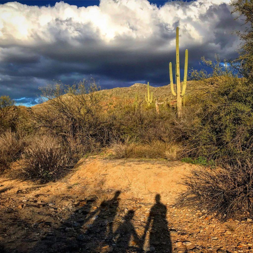 Parkseekers Saguaro Shadows